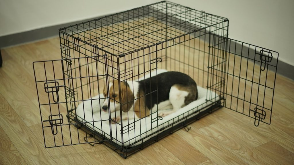 clean dog cage
